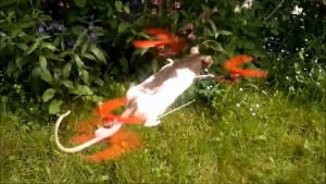 Teen Turns Dead Pet Hamster Into World's First Ratcopter