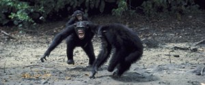 Chimps May Look Cute, But Controversial New Study Says They're Natural-Born Killers