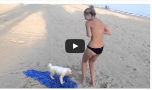 Woman Tries To Relax On The Beach, Dog Has Other Plans For Her Bikini