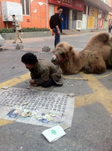 Chinese Beggars Stoop to Mutilating Camels to Gain Sympathy and Improve Earnings