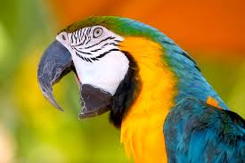 Parrot Missing For 4 Years Comes Home Speaking Spanish
