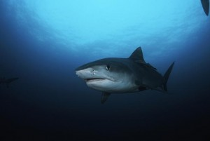 Fishermen in Philippines Say they Found Human Head Inside Shark